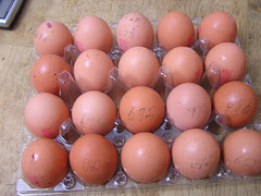 Aldi Healy's Farm 20 Large Eggs @3.50 22072015 - Egg weights - 03-07-2015 (Lord Inquisitor) Tags: brown farm eggs hen aldi eggcarton healys heneggs eggweights