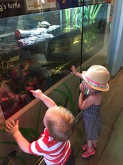 "Paul Sees a Turtle at Brookfield Zoo • <a style=""font-size:0.8em;"" href=""http://www.flickr.com/photos/109120354@N07/19990536812/"" target=""_blank"">View on Flickr</a>"