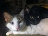 Sisters (Whatknot) Tags: 2016 tupelo mississippi whatknot buttons shadow sisters cat