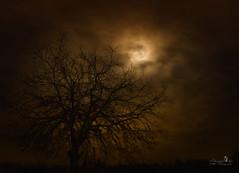 mystic night (Schneeglöckchen-Photographie) Tags: mystic night