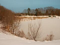 Foxboro Cranberry Nature Trail 6 (dennisgg2002) Tags: foxboro massachusetts ma cranberry bogs winter new england snow landscapes