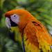 Stunning+Macaw