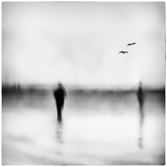 At the Shore (Tracy Linnel.) Tags: blackandwhite serene art blur bird shoreline silhouette abstract people landscape beach birds photoborder softfocus impressionism tracylinnel artistic longexposure seagulls