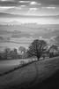 Over the Hill (Sarah_Brooks) Tags: sunbeams sunrays cloud mist winter mono monochrome tree lonetree path hill december misty evening