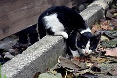 Street cat (elka.) Tags: katze chat cat kot katte neko nikon nature cats kitten kotka kotek katt greece gata gato kitty kedi outdoor corinth kissa kucing cattus pisica gatta gatto gatti gatz kat katinas kato kottur kotuk koćka maćka popoki street stray biss γάτα кошка кошки feline котка