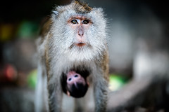 monkeys-1025