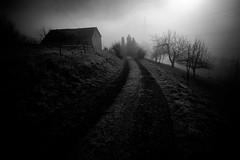 The cabin in the woods pt.II (AlphaAndi) Tags: mono monochrome landschaft landscape nebel natur nature noir nebelig fullframe fog mist misty trier tiefenschärfe deepoffield dof blackandwhite blackwhite bw bokeh bokehlicious vollformat sony schwarzweis sonya7ii zeiss zeissbatis25mmf20