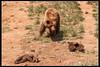 Osos (Raúl Mena) Tags: bear naturaleza nature animal animals fauna canon animales cantabria osos cabárceno 500d canon70300 canoneos500d