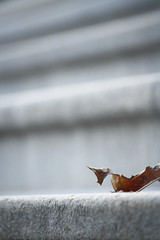 FP_941 (ILikeTakingDigitalPhotos) Tags: fall foliage capitol upstatenewyork albanynewyork 2011