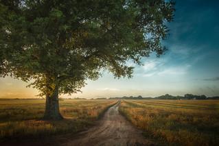Lone Tree On Dirt Road
