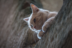 Cat of Provence. (Oleg.A) Tags: france cat provence lesarcs provencealpescôtedazur lesarcssurargens