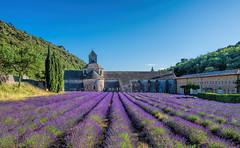 Abbazia di Nostra Signora di Sénanque (marypink) Tags: abbaziadisénanque provenza francia lavanda lavander prospettiva pov summer nikkor1635mmf40 nikond7200