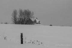 La Maison Perdue au Loin (Sous l'Oeil de Sylvie) Tags: maison house campagne rural ruralité sousloeildesylvie neige snow hiver winter arbres trees janvier january 2016 beauce québec noiretblanc blackandwhite