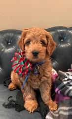 Jill's sweet boy Brody!