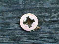 Screw - Vrut (jirka-2) Tags: macro makro screw wood vrut oldnew macromakro old new