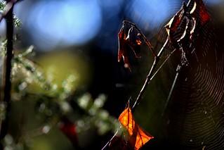Y se nos va el otoño...(Explore)