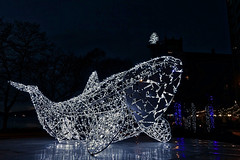 2016/366/343 West End Whale (Edna Winti) Tags: ednawinti vancouver westend lumiere luna whale christmaslights 2016366 publicart