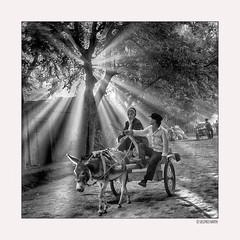 Lost in China010/15 (siggi.martin) Tags: asien asia china turfan mann man männer men vaterundson fatherandson karren cart esel donkey eselskarren donkeycart morgenlicht morninglight baum tree bäume trees lichtstrahlen rayoflight raysoflight