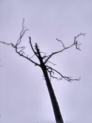 Шедевр завидовского леса