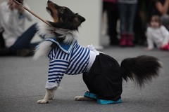 Первый новогодний карнавал животных прошел на Рождественской ярмарке