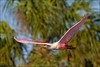 Roseate Spoonbill (Daniel Cadieux) Tags: spoonbill roseatespoonbill palm palmtrees florida tampabay pink fly flying flight