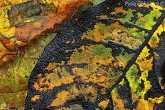 foglie, leaves (paolo.gislimberti) Tags: autunnocoloriautunnalifoglie autumn autumnalcolors leaves sottobosco undergrowth macro