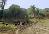 16 5171 - Inde, Rajasthan, troupeau sur la route de Fort Neemrana (jeanpierreossorio) Tags: inde rajasthan animaux chèvre troupeau berger