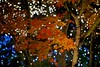 Illumination (tez-guitar) Tags: maple leaves leaf autumn autum 紅葉 autumn nightscape night illumination pentax pentaxart tree trees wood