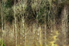 A Tree-atise on Nature (David Basiove) Tags: film 35mm canonf1 forest bush poplar birch fall canada canadian october