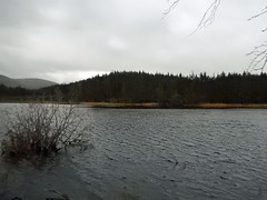 Uath Lochan, 2016 Dec 30 (Dunnock_D) Tags: uk unitedkingdom britain scotland highlands highland badenoch grey cloud cloudy sky heather woods woodland forest uathlochans uath lochan