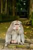 this is my happy face (Sam Scholes) Tags: sangehmonkeyforest badungregency purabukitsari hinduism hindu travel bukitsaritemple bali palaforest sangeh holymonkeyforest vacation indonesia denpasar moneyforest abiansemal id
