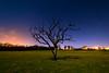 Pentre Meyrick night tree (technodean2000) Tags: uk wales south cowbridge lighting up tree with torch stars night lightroom photo canvas outdoor plant