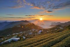 頂石棹 ~茶園夕彩~   Tea farm Sunset (Shang-fu Dai) Tags: 台灣 taiwan 嘉義 番路 sunset 夕彩 clouds nikon d800e 阿里山 alishan 茶園 teanfarm landscape 頂石棹 formosa 戶外 天空
