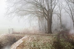 Winter in Drunen (Gerhard111) Tags: drunen baardwijkseoverlaat netherlands nederland noordbrabant niederlande elitegalleryaoi bestcapturesaoi ruby10 ruby15 ruby20 rubyfrontpage
