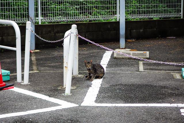Today's Cat@2015-07-02