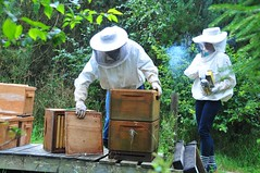 7/8.2015 - harvesting honey (julochka) Tags: bees honey 365 beekeeping homesteading