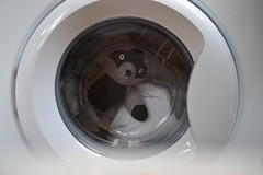 Ground Control to Major Tom (mitchell_dawn) Tags: window kitchen toy laundry porthole raccoon washingmachine washing viewfrommywindow appliance cuddlytoy softtoy flickrfriday