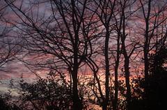 Shepherd's Delight (Doolallyally) Tags: sky redsky evening dusk devon england saveearth