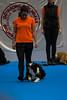 My dog 2017 (Civilaction) Tags: mydog 2017 mydog2017 göteborg svenskamässan svenska mässan hundar dogs portrait porträtt sigma85mmart sigma canon 1dx