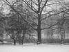 Park During A Snowstorm; Manhasset, New York (hogophotoNY) Tags: hogophoto howardgorchov howardgorchovphotography manhasset manhassetny manhassetnewyork us usa hogo park snow weather snowy snowstorm storm winter winterweather bw blackandwhite blackwhite 17 2017 january2017 jan2017 eastcoast newyorkstate