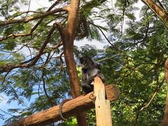 IMG_1351 (kamemex) Tags: メリダ動物園 センテナリオ サル