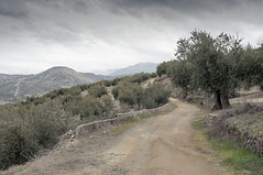 Paseo por la Sierra Sur I (EDU S.G.) Tags: paseo walk stroll camino pathe sendero way olivo countryside country sierra sur jaen españa andalucia spain andalusia nature paisaje landscape cielo sky nubes clouds