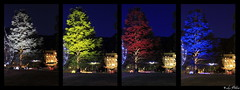 Four Colors Tree (Luca Bobbiesi) Tags: colors tree levicoterme mercatinidinatale trentinoaltoadige canoneos7d canonef24105mmf4lisusm