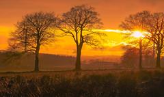 Gold-Trees and turbines (David and Lisa Mowbray) Tags: sun sky sunset sundown dawn orange yellow trees turbine landscape scotland scenery nature sunlight countryside outdoors grass clouds canon