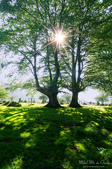 sunny forest (Mimadeo) Tags: trees light shadow summer two sun sunlight tree green grass lines backlight forest landscape spring shadows sunny rays backlit trunks sunrays sunray sunbeams springtime