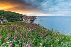 Wild Flower Sunset (Steven Peachey) Tags: uk england sky seascape clouds landscape photography exposure ngc cliffs wildflowers countydurham ef1740mmf4l easington lee09gnd leefilters canon6d lightroom5 hawkdog
