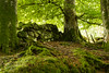 Woodland Logs (starst0rm*<(*?*)>*) Tags: woodland forest green logs scotland stirlingshire