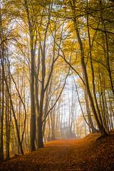 Autumnal+Path