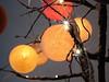 Cotton Balls Sparkle (Heaven`s Gate (John)) Tags: cotton ball lights christmas tree festive seasons greetings johndalkin heavensgatejohn sparkle design art atmosphere macro closeup