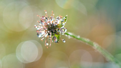 fleur d'eau (christophe.laigle) Tags: waterdrops drops macro xf60mm gouttes fuji couleurs xpro2 colours christophelaigle